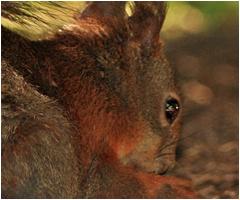 Squirrel Removal Mint Hill Matthews Mecklenburg County North Carolina